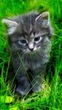 Gatito gris precioso en la hierba
