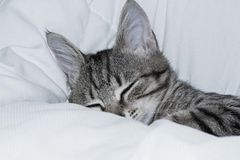 Gatito gris que duerme en la manta Foto de archivo