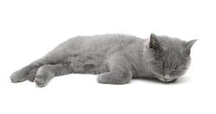 Gatito gris que duerme en un fondo blanco Foto de archivo