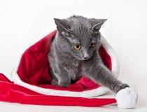Gatito gris que se sienta con el sombrero de la Navidad Imagen de archivo libre de regalías