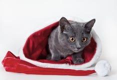 Gatito gris que se sienta con el sombrero de la Navidad Fotografía de archivo