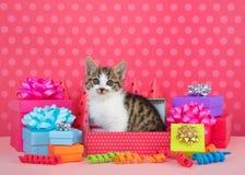 Gatito gris y blanco del gato atigrado en cajas del cumpleaños Imagen de archivo