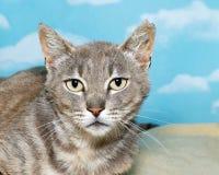 Gatito gris y blanco del gato atigrado en la manta Foto de archivo libre de regalías