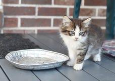 Gatito hambriento Imagenes de archivo