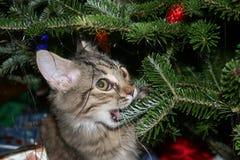 Gatito hasta ningún bueno Fotos de archivo