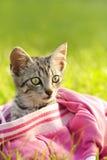 Gatito hermoso Foto de archivo