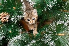 Gatito hermoso con el árbol de abeto Fotos de archivo