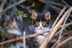 Gatito hermoso con los ojos verdes azules Fotografía de archivo