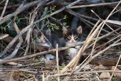 Gatito hermoso con los ojos verdes azules Imagenes de archivo