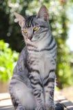 Gatito hermoso del gato atigrado fotos de archivo libres de regalías