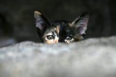 Gatito hidding detrás de la pared de piedra Imagenes de archivo
