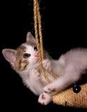 Gatito joven Imagen de archivo libre de regalías