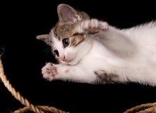 Gatito joven Foto de archivo