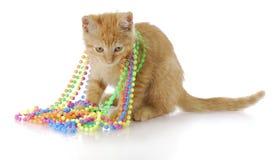 Gatito juguetón Fotografía de archivo