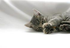 Gatito juguetón Foto de archivo libre de regalías