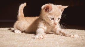 Gatito juguetón Fotos de archivo