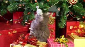 Gatito juguetón debajo de un árbol de navidad metrajes