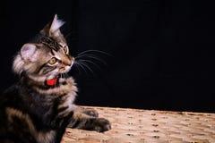 Gatito juguetón en una cesta fotografía de archivo libre de regalías