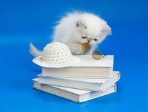Gatito, libros y vidrios Imagen de archivo libre de regalías