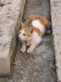 Gatito lindo Imagen de archivo libre de regalías
