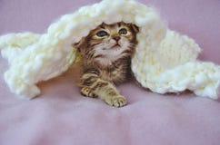 Gatito lindo Imágenes de archivo libres de regalías