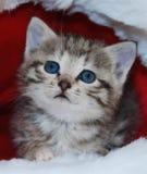 Gatito lindo Imagenes de archivo
