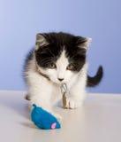 Gatito lindo Fotografía de archivo libre de regalías