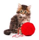 Gatito lindo Fotos de archivo libres de regalías