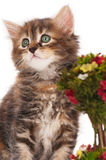 Gatito lindo Imagen de archivo