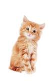 Gatito lindo fotos de archivo