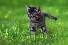 Gatito lindo Foto de archivo