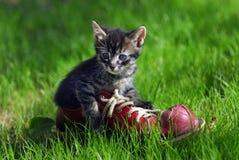 Gatito lindo Foto de archivo libre de regalías