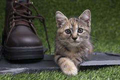 Gatito lindo adorable y zapato de cuero grande en artificial verde Imágenes de archivo libres de regalías