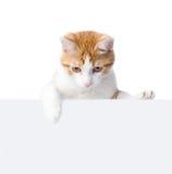 Gatito lindo con el tablero vacío Aislado en el fondo blanco Foto de archivo