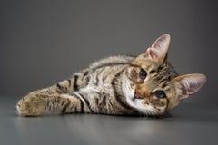 Gatito lindo con la demostración del tercer párpado (saliente de la membrana nictitante) fotografía de archivo