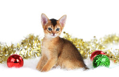 Gatito lindo con las bolas de la Navidad Foto de archivo