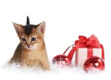 Gatito lindo con las bolas de la Navidad y la caja de regalo Fotografía de archivo