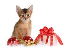 Gatito lindo con las bolas de la Navidad y la caja de regalo Imagen de archivo libre de regalías