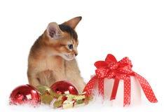 Gatito lindo con las bolas de la Navidad y la caja de regalo Imagen de archivo