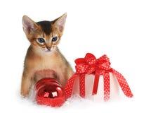 Gatito lindo con las bolas de la Navidad y la caja de regalo Fotografía de archivo libre de regalías