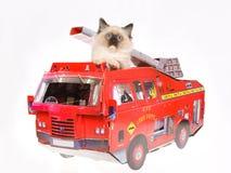 Gatito lindo de Ragdoll en coche de bomberos rojo en BG blanca Imagen de archivo libre de regalías