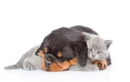 Gatito lindo del abarcamiento del perrito del rottweiler el dormir Aislado en blanco Imagenes de archivo