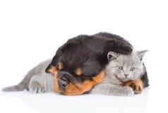Gatito lindo del abarcamiento del perrito del rottweiler el dormir Aislado en whi Imagen de archivo