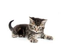 Gatito lindo del gato atigrado Imagen de archivo