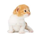 Gatito lindo del rojo anaranjado aislado imagen de archivo libre de regalías