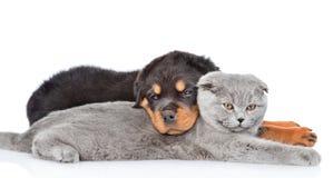 Gatito lindo del rottweiler del abarcamiento triste del perrito Aislado en blanco Imagen de archivo