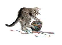 Gatito lindo del tabby con la bola del hilado en blanco Imagenes de archivo
