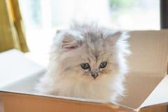 Gatito lindo en cardbox foto de archivo