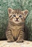 Gatito lindo en fondo verde Fotografía de archivo libre de regalías