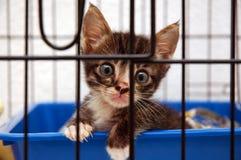Gatito lindo en jaula Imagen de archivo